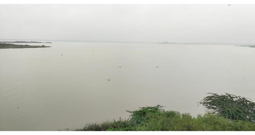 સૌરાષ્ટ્રમાં હરખની હેલી: શેત્રુંજી, ન્યારી સહિત 38 ડેમો ઓવરફલો