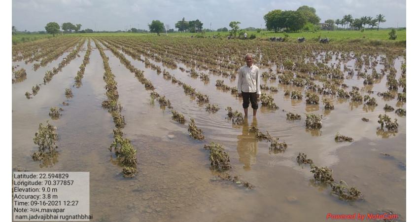 જિલ્લામાં 1600 જેટલા પશુઓના જળ હોનારતમાં મોત
