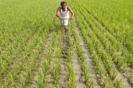 જામનગરના ખેડૂતોને બાગાયત વિભાગની વિવિધ યોજનાઓનો લાભ લેવા અનુરોધ