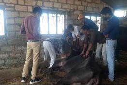 પાલીતાણાના ડુંગરપુર ગામે પશુઓમાં ભેદી રોગચાળો : 9ના મોત-3 બિમાર